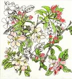 Apple Blossom by Jackie Abey, Drawing, Pen on Paper