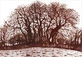 Long Meadow 1 by Jackie Abey, Drawing, Pen on Paper