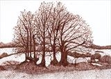 Long Meadow 2 by Jackie Abey, Drawing, Pen on Paper