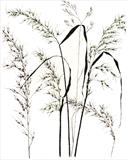 Meadow Grass 2 by Jackie Abey, Drawing, Pen on Paper