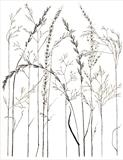 Meadow Grass 3 by Jackie Abey, Drawing, Pen on Paper