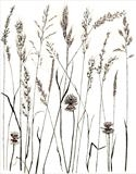 Meadow Grass 4 by Jackie Abey, Drawing, Pen on Paper