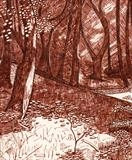 Rectory Woods 1 by Jackie Abey, Drawing, Pen on Paper
