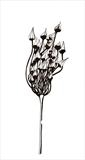seed head 1 by Jackie Abey, Drawing, Pen on Paper